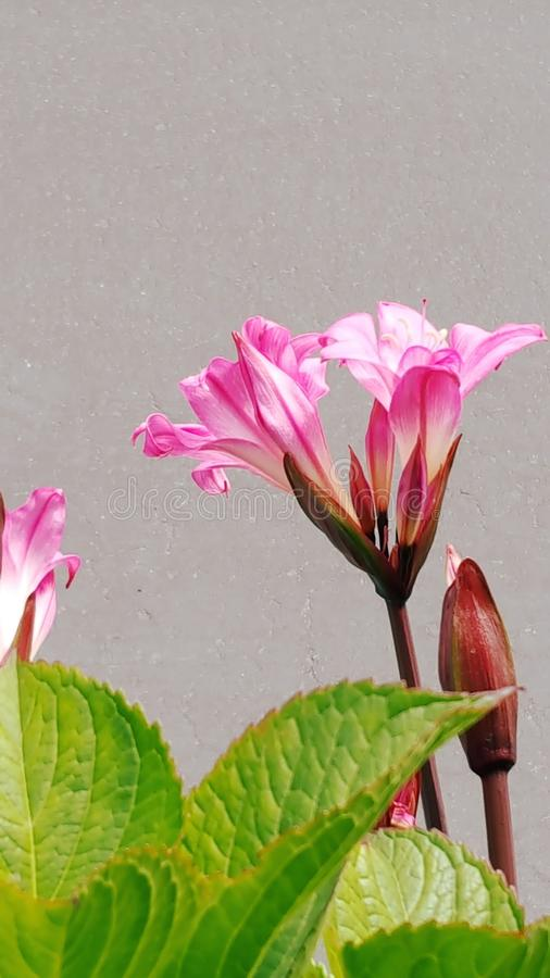 Flor simple fotografía de archivo