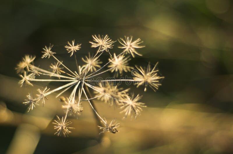 Flor sin savia de la foto foto de archivo libre de regalías