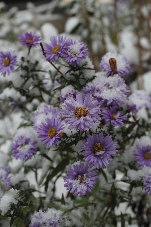 Flor sob a neve imagens de stock royalty free