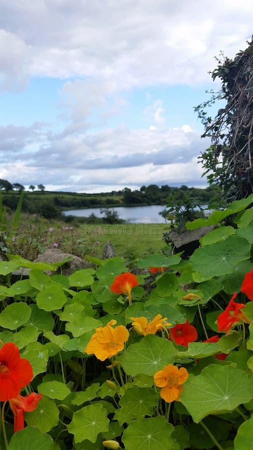 Flor sobre el lago imagen de archivo