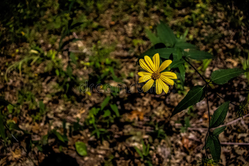 Flor sola fotografía de archivo libre de regalías