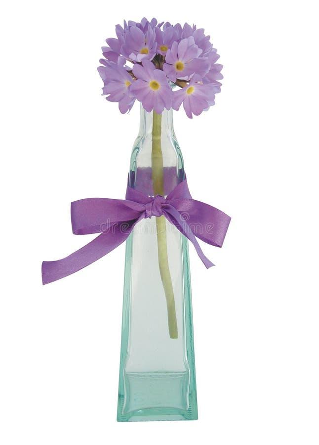 Flor solitaria foto de archivo libre de regalías