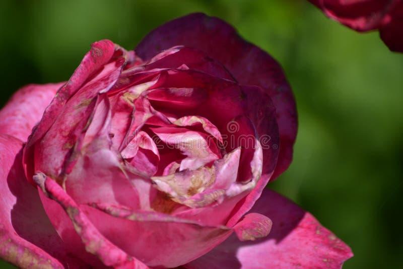 Flor sombreada fotografía de archivo libre de regalías