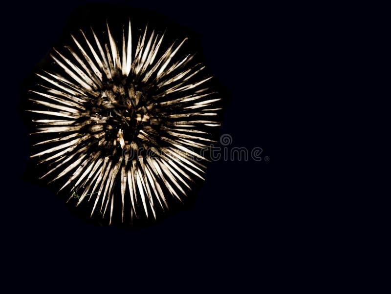Flor Spiky fotografia de stock royalty free