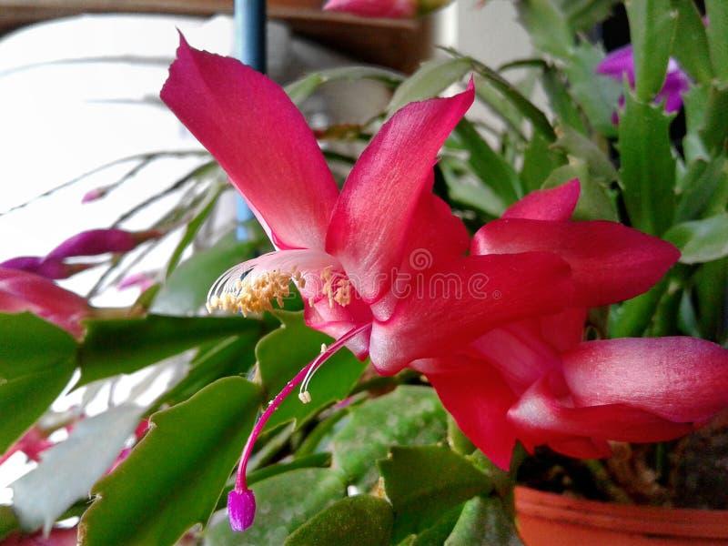 Flor Spiky fotos de stock