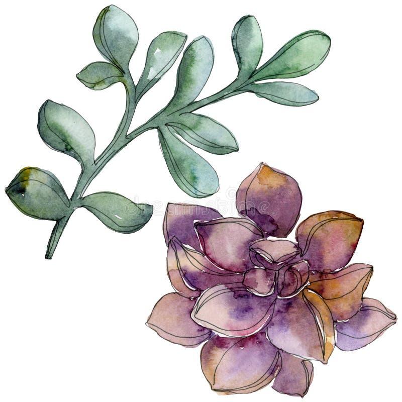 Flor suculento botânica da selva Grupo da ilustração do fundo da aquarela Elemento suculento isolado da ilustração ilustração do vetor