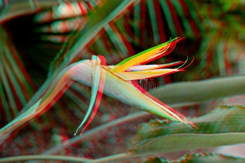 Flor surreal do strelitzia do pulso aleatório na moda tropical vívido e fundo floral imagens de stock royalty free