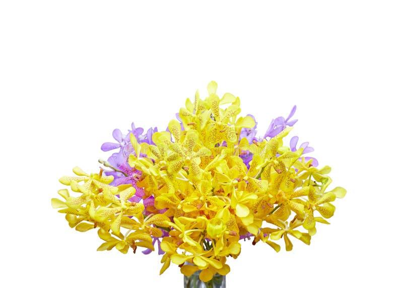 Flor tailandesa do close up, a amarela e a roxa da orquídea isolada no fundo branco com máscara do grampeamento imagens de stock royalty free