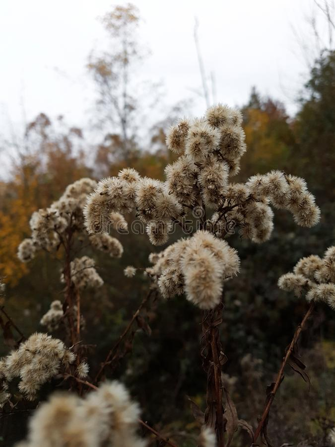 Flor temperamental no outono imagens de stock