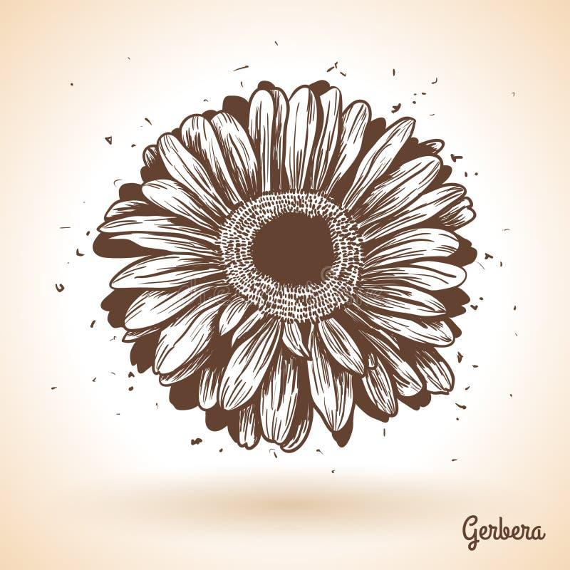 Flor tirada mão do gerbera ilustração do vetor