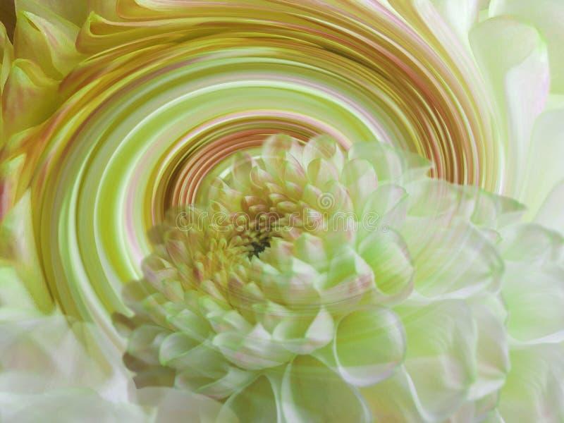 Flor transparente blanco-amarilla de la dalia en el fondo del espiral del arco iris Composición floral Fondo floral fotos de archivo
