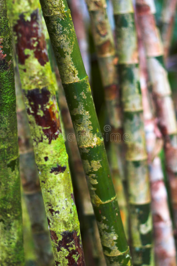 Download Flor tropical foto de stock. Imagem de grande, colorido - 10053692