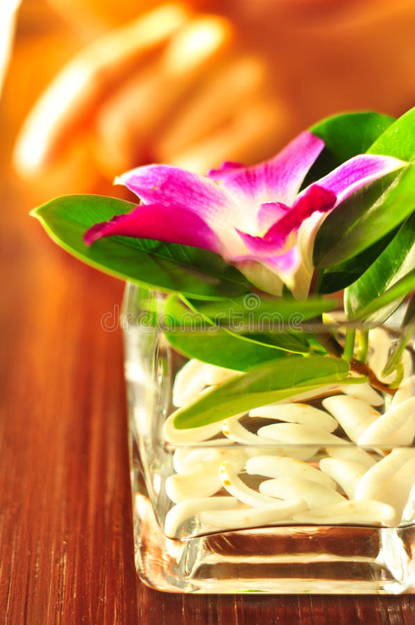 Flor tropical imagem de stock royalty free