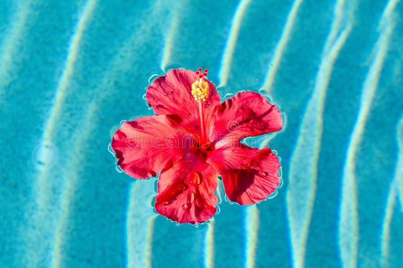 Flor tropical imagens de stock