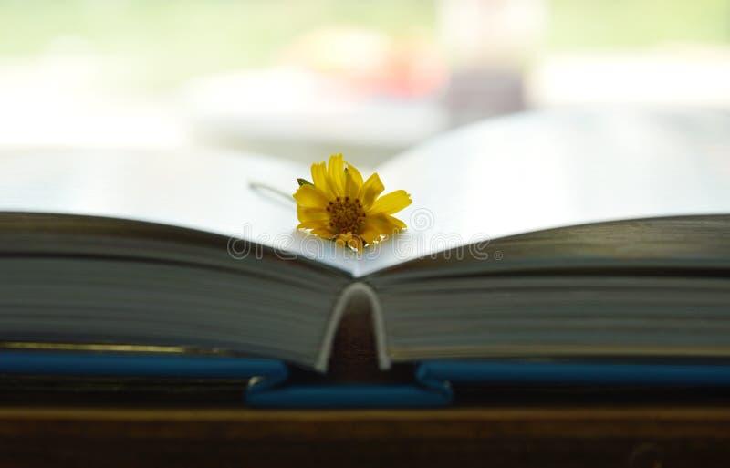 Flor tropical amarilla de la maravilla en las páginas del libro foto de archivo libre de regalías