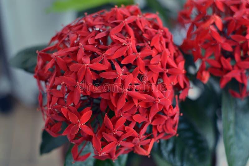 Flor tropical Heliconia fotografía de archivo libre de regalías