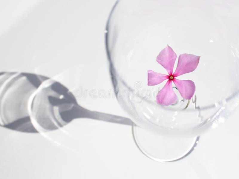 Flor vacía foto de archivo libre de regalías