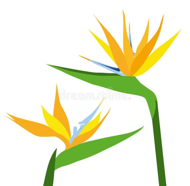 Flor-vector de las aves del paraíso ilustración del vector