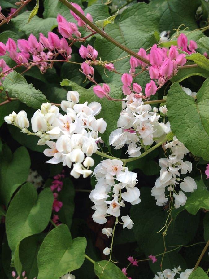 Flor, verde imagem de stock royalty free