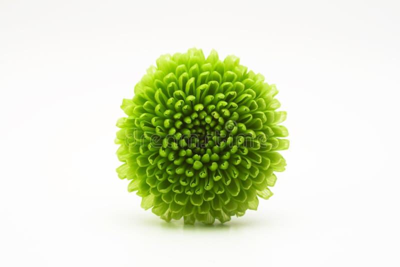 Flor verde bonita fotos de stock royalty free
