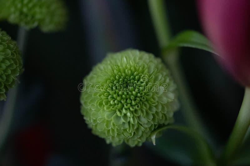 Flor verde de la bola del soplo foto de archivo libre de regalías