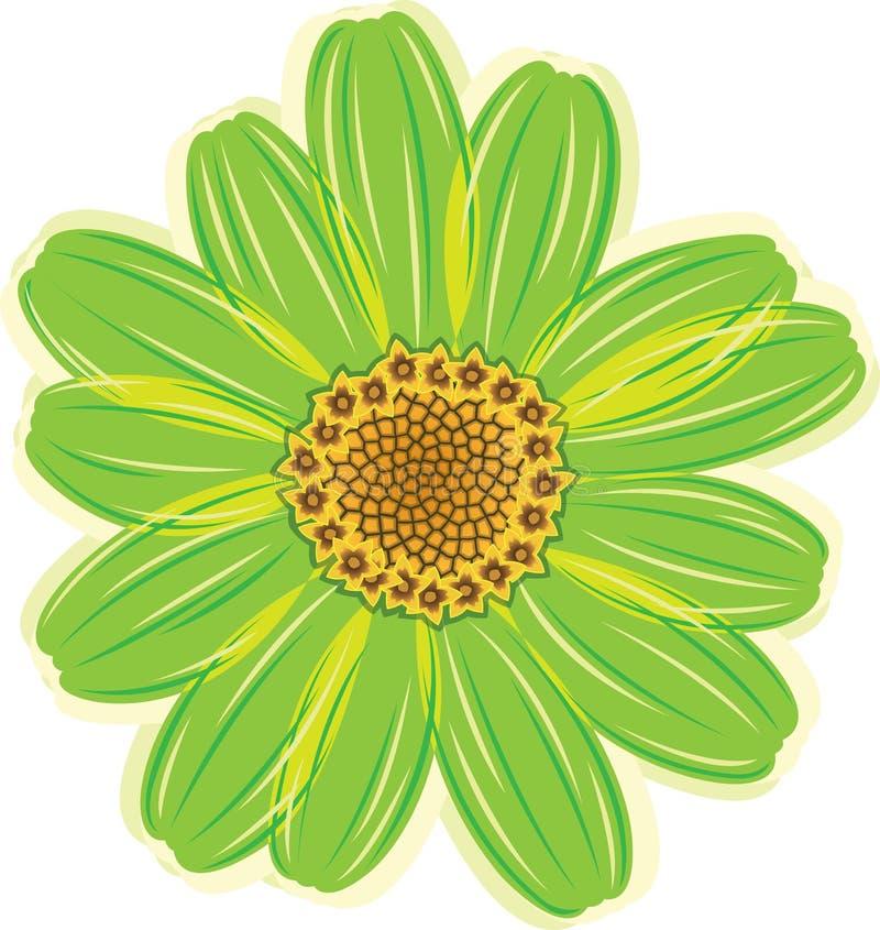 Flor verde de la margarita stock de ilustración