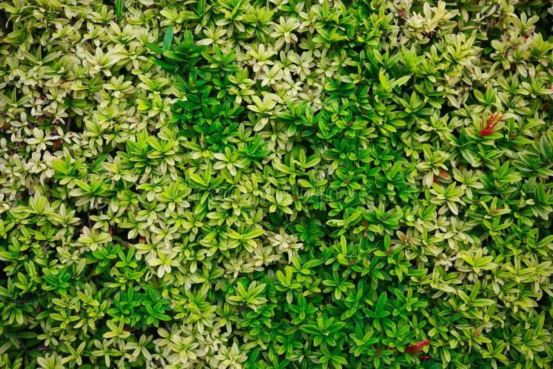 Flor verde e folha verde na natureza para o fundo Conceito da natureza com área vazia para o texto sentimento relaxado na naturez fotografia de stock