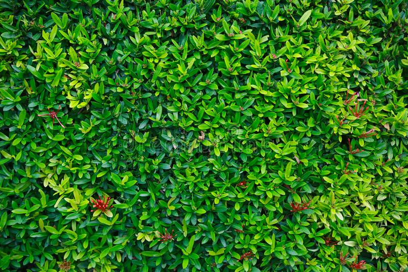 Flor verde e folha verde na natureza para o fundo Conceito da natureza com área vazia para o texto sentimento relaxado na naturez imagens de stock royalty free