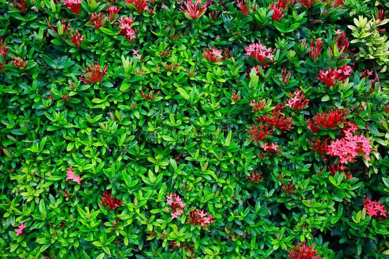 Flor verde e folha verde na natureza para o fundo Conceito da natureza com área vazia para o texto sentimento relaxado na naturez fotografia de stock royalty free