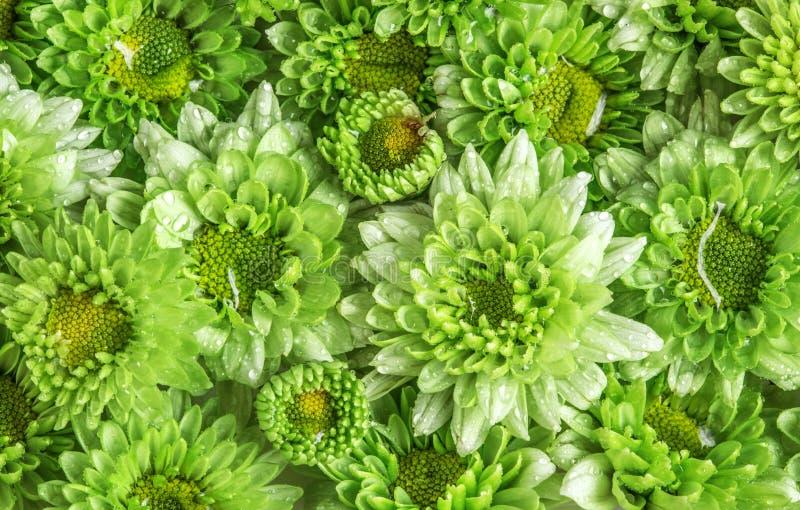 A flor verde fresca macia com gota da água de chuva para o amor romant imagens de stock royalty free