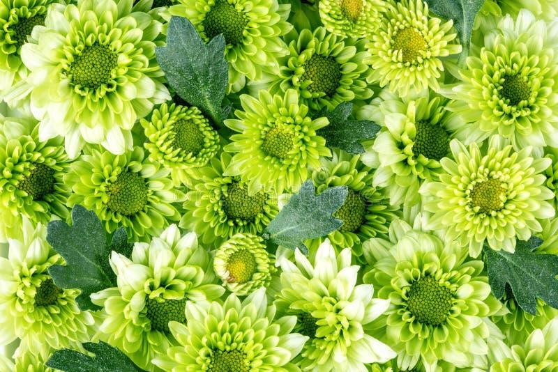 Flor verde fresca macia com gota da água de chuva para o fundo sonhador romântico do amor, um fresco e para relaxar o conceito fotos de stock