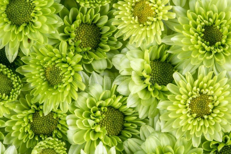 Flor verde fresca macia com uma gota da água de chuva para o romanti do amor imagem de stock