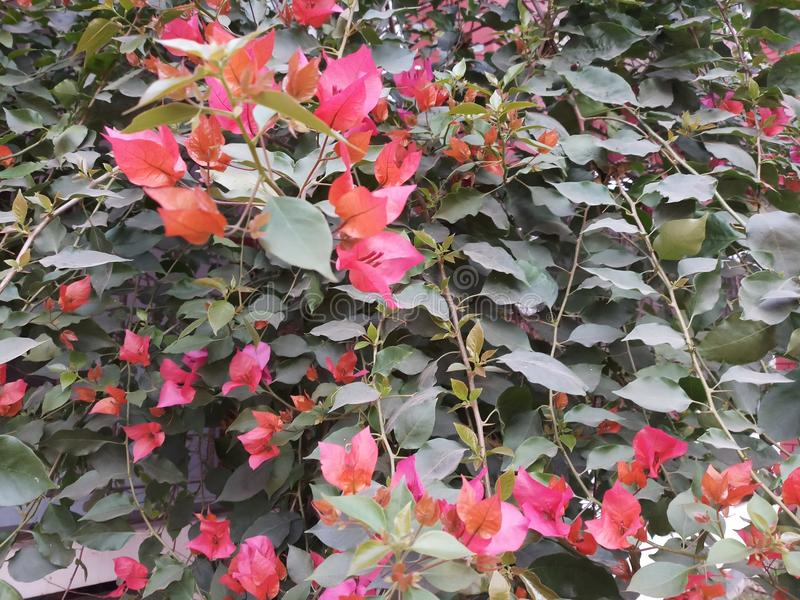 Flor vermelha imagem de stock