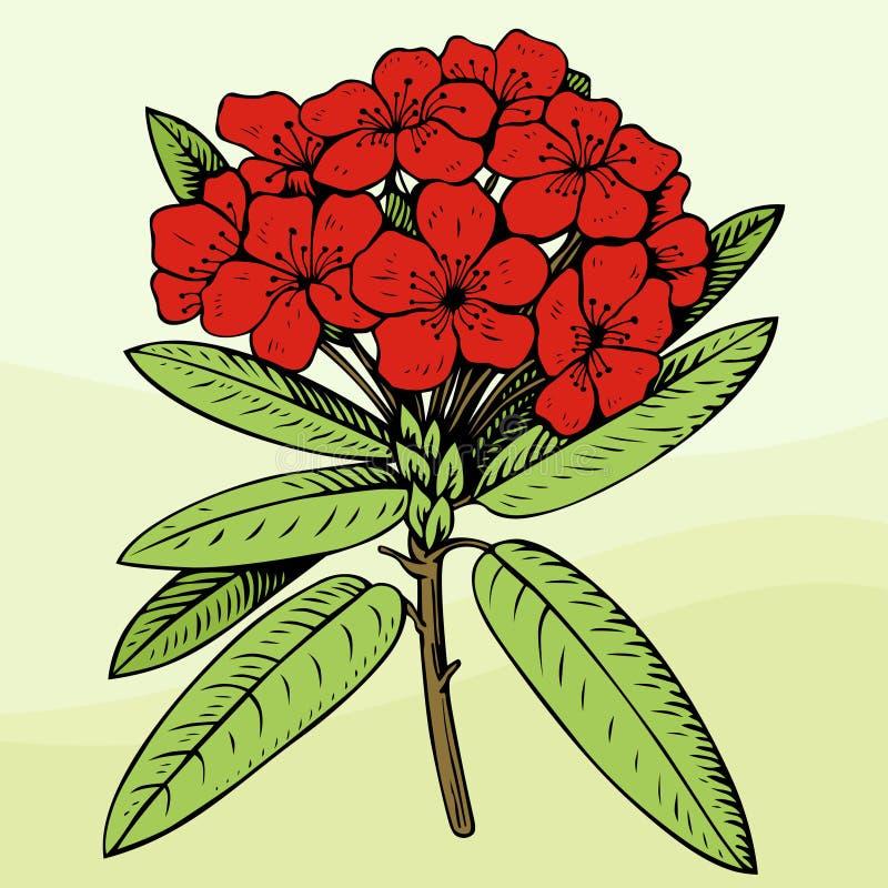 Flor vermelha ilustração do vetor