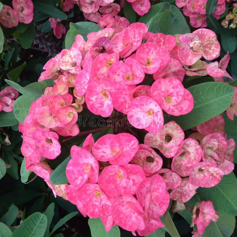 Flor vermelha agradável no jardim imagem de stock