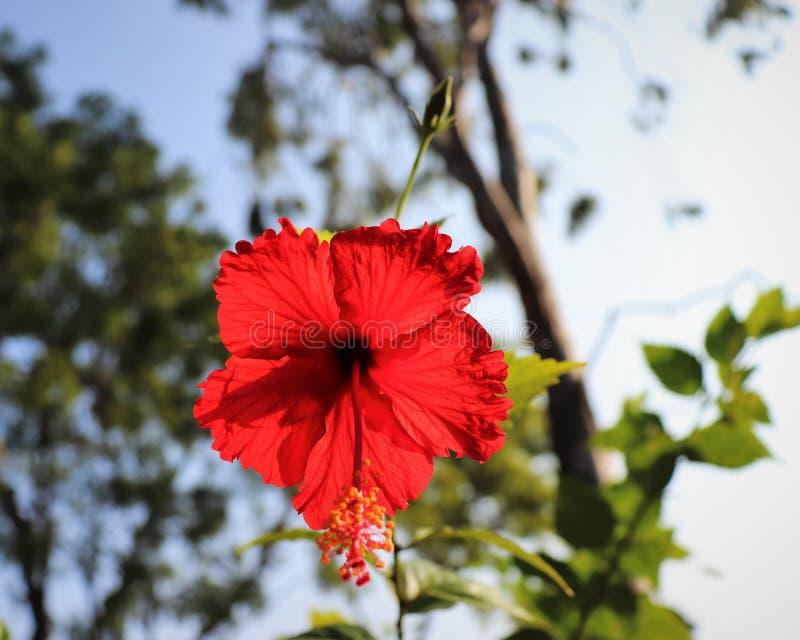 Flor vermelha com fundo borrado do c?u imagem de stock royalty free