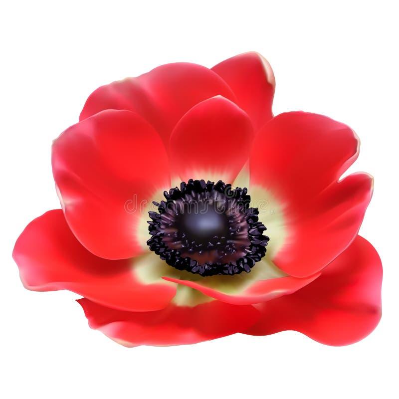 Flor vermelha da mola da flor ilustração stock