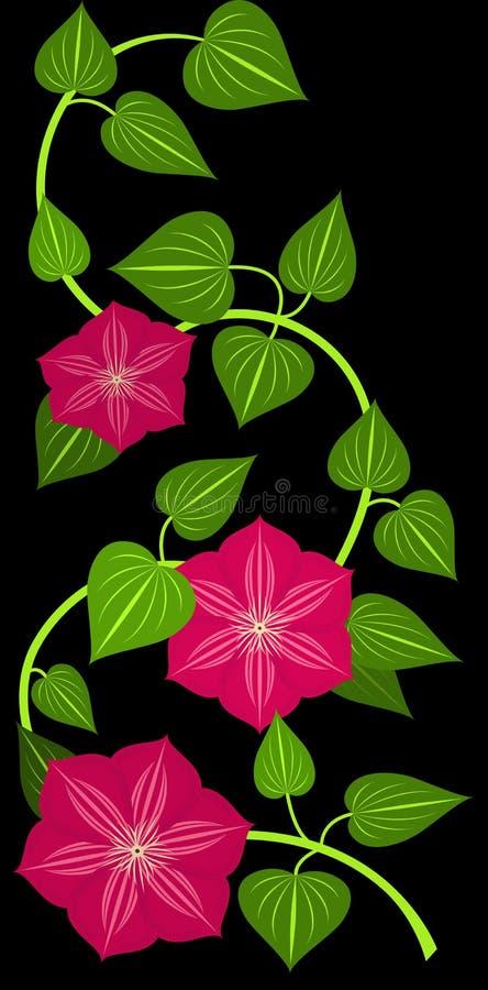Flor vermelha do clematis ilustração do vetor