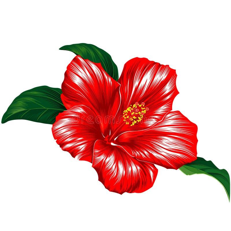 Flor vermelha do hibiscus ilustração royalty free