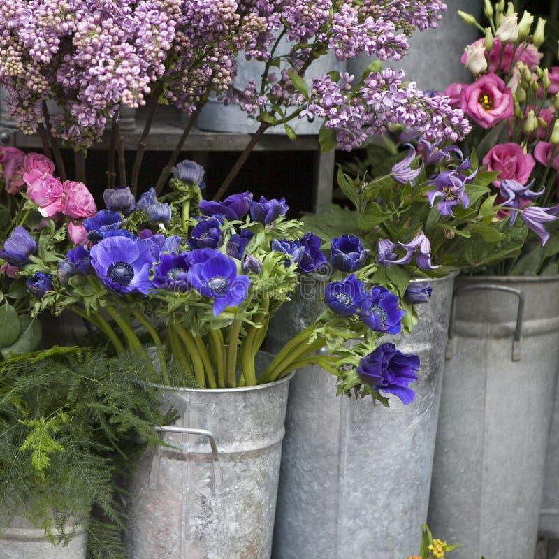 Flor vermelha e azul da mola imagem de stock