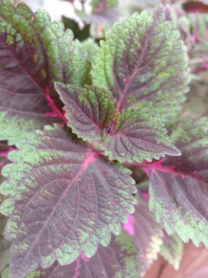 flor vermelha e verde fotos de stock royalty free