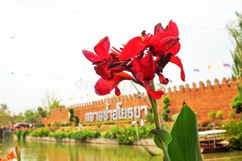 Flor vermelha manchada fotografia de stock royalty free