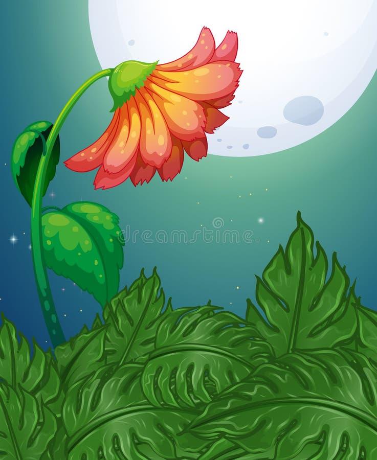 Flor vermelha na noite da Lua cheia ilustração stock