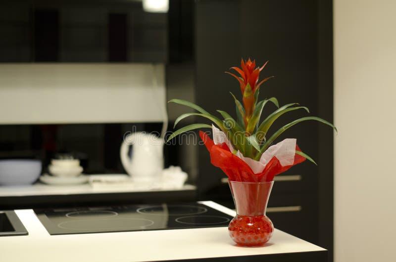 Flor vermelha no contador de cozinha imagem de stock royalty free