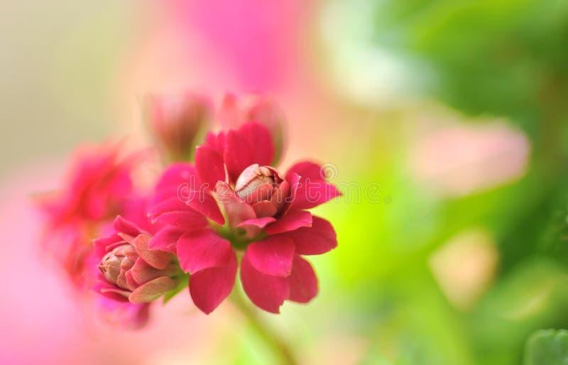 Flor vermelha no jardim imagem de stock