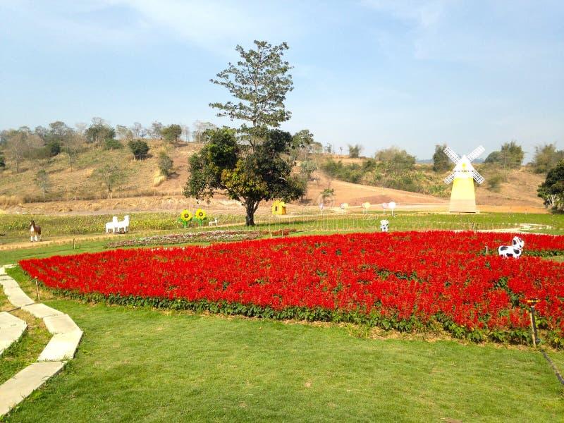 Flor vermelha no jardim e no céu azul fotos de stock royalty free