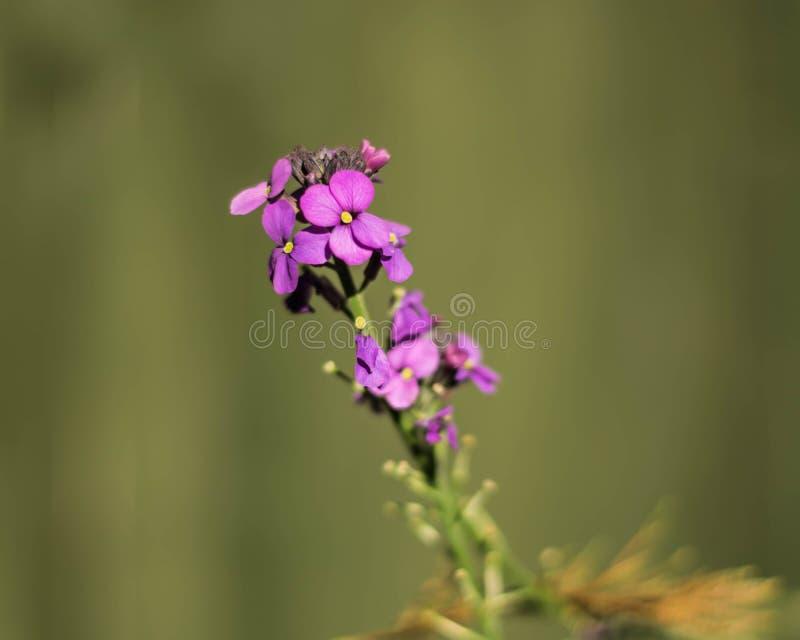 Flor vibrante imagens de stock