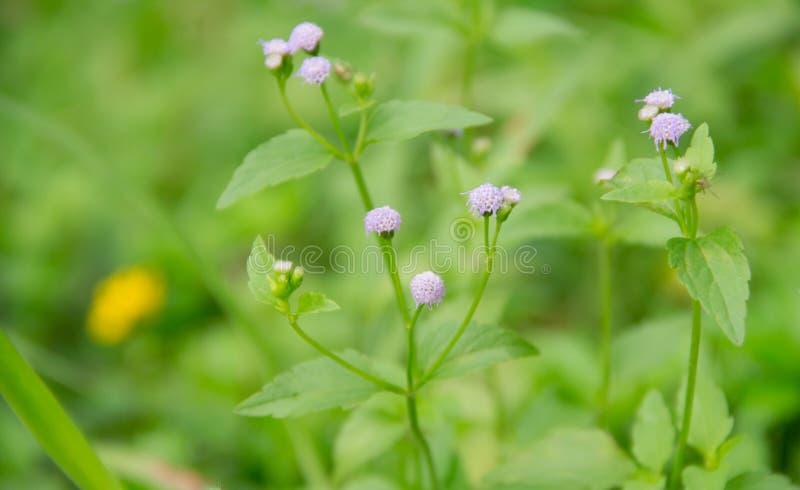 Flor violeta imagens de stock