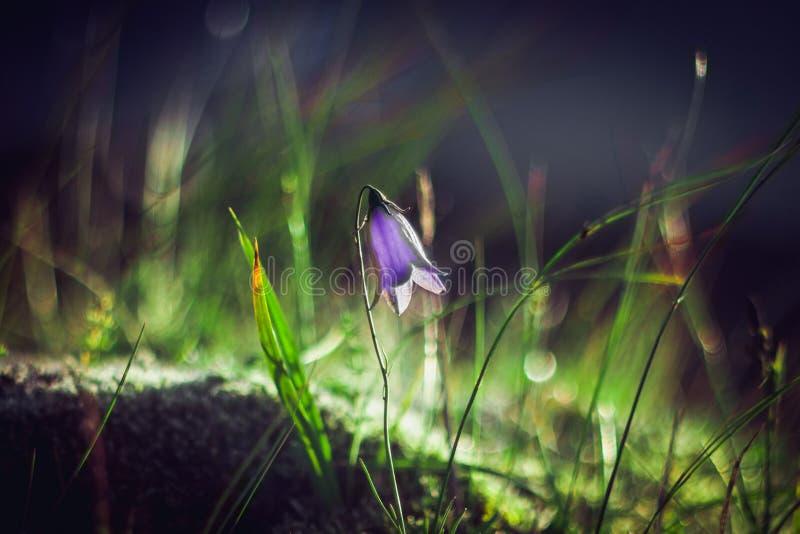 Flor violeta fotos de stock