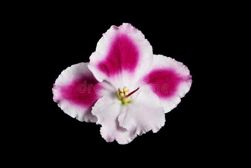 Download Flor violeta foto de archivo. Imagen de decoración, flor - 7150596